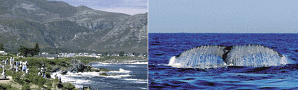 blog-whale-watching.jpg