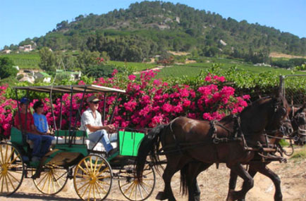 Wine Valley Horse-drawn carriage