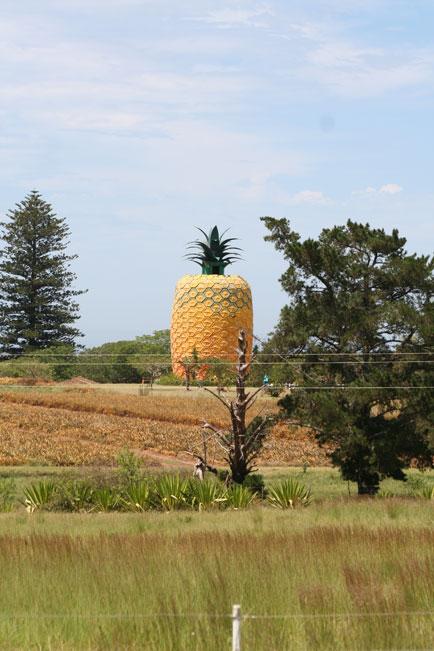 Pineapple in Bathurst