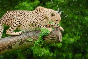 Animal Sanctuaries In Johannesburg