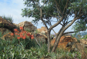 Explore Melville Koppies Nature Reserve