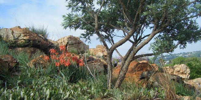 Explore Melville Koppies Nature Reserve