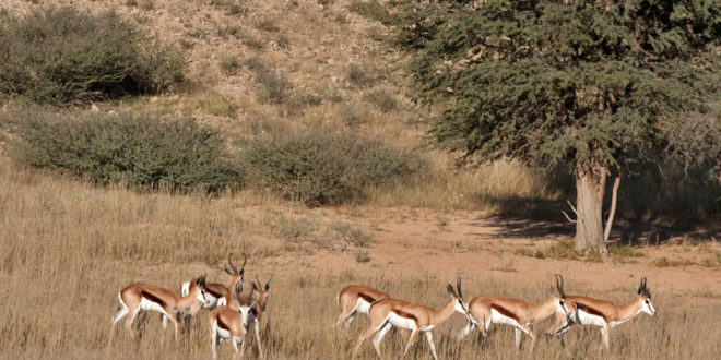 Rooi Cederberg Karoo Park