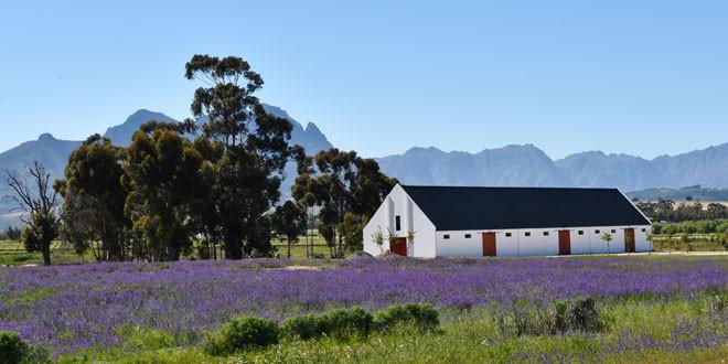 Exploring Stellenbosch
